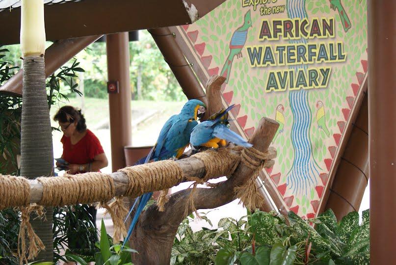 Jurong Bird Park, Singapore : Macaws near the Entrance