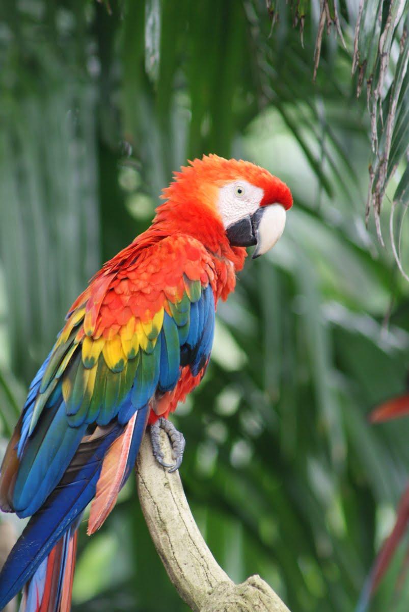 Jurong Bird Park Singapore - Macaw