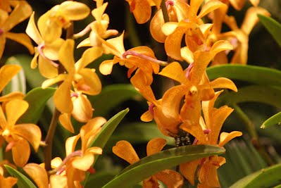 Changi Airport - Orchid Garden - Part I