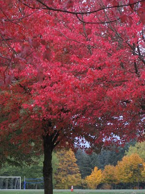 Colors in the Fall - Redmond turns Red