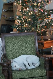 Rambo curled on the couch under the Christmas tree