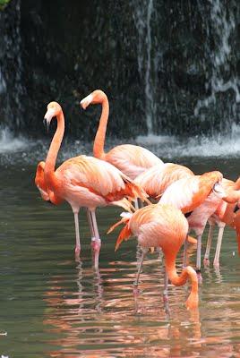 Jurong Bird Park, Singapore -  Flamingos near a waterfall