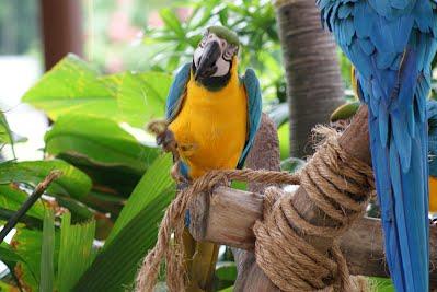 Jurong Bird Park, Singapore - Macaws