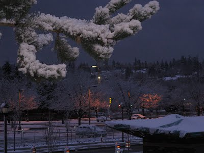 Redmond Transit Center and its surroundings - Snow on a pine tree